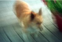 Blur Penny